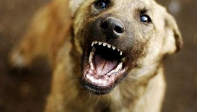 На Миколаївщині від сказу помер чоловік після укусу пса