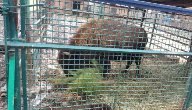Тварин у Менському зоопарку підгодовують непроданими ялинками