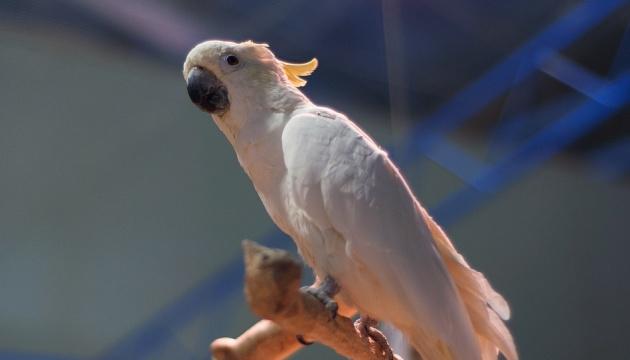 У Харкові волонтери рятують 50 хворих папуг, яких викинули до лісу