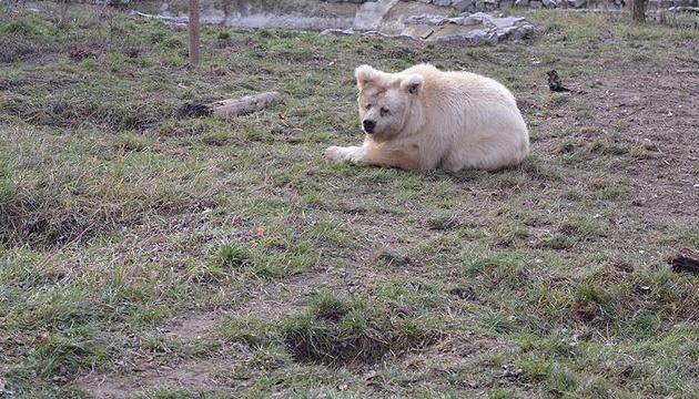 Под Житомиром проснулись медведи - гуляют и греются на солнышке