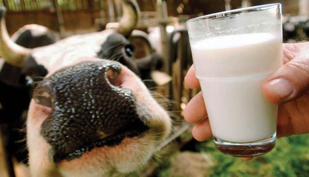 Ukraine's milk production decreases 3.7% in 2019