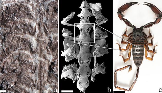 Вчені виявили рештки однієї з найперших наземних тварин