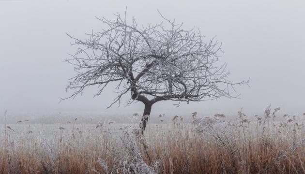 В Украину идет похолодание с мокрым снегом, в Карпатах - метель и ветер до 40 м/с