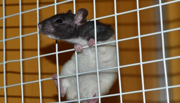 МОЗ хоче заборонити тестування косметики на тваринах