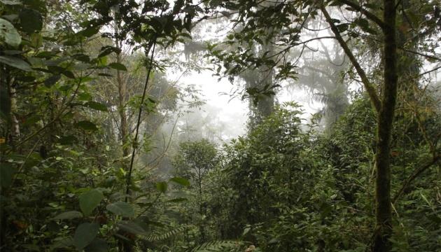 В Амазонії знайшли живою жінку з трьома дітьми, які блукали у лісі 34 дні
