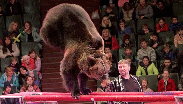 МКМС готує законопроєкт про заборону використання тварин у цирках
