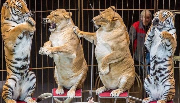 Національний цирк намагається зменшити використання тварин у програмах - директор