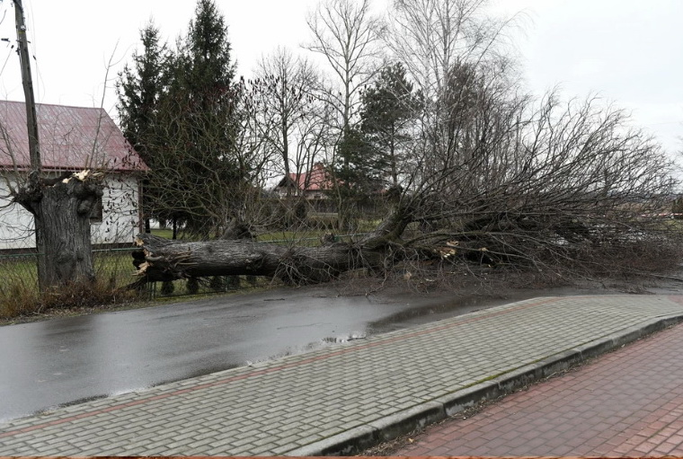 Фото: Onet.pl.