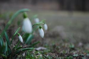 В первый день весны украинцам обещают от 9° мороза до 11° тепла