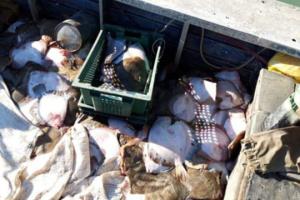 Россия до сих пор официально не сообщила о задержании украинских рыбаков