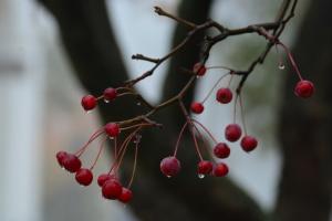 Прогноз негоди: весна іде з грозами та сильним вітром