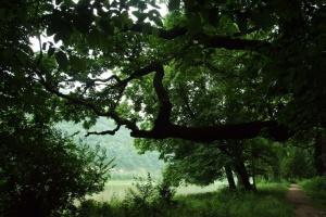 Туристам на Тернопільщині допоможе нова інтерактивна карта природних «родзинок»