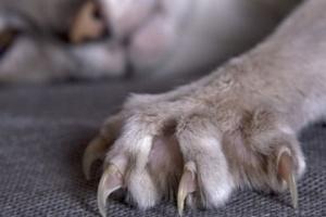 У Харкові скажений кіт покусав людей - ввели карантин