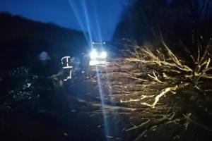 Негода на Прикарпатті: впало дерево і пошкодило рейсовий автобус