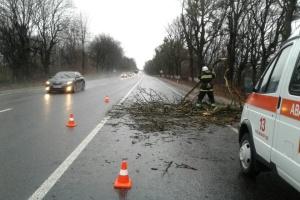 На Винниччине поваленные деревья заблокировали дороги