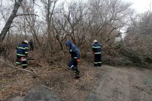 Ураганний вітер на Миколаївщині повалив дерева та пошкодив мости
