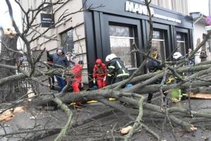 На Кіровоградщині через сильний вітер упало дерево та травмувало жінку