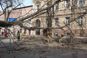 На Одесщине преодолевают последствия непогоды - ветер обесточил 145 сел