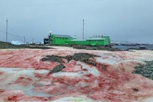 Сніг біля української станції в Антарктиді став малиновим