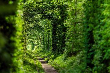 El Túnel del Amor ucraniano en la lista de los lugares románticos del mundo poco conocidos