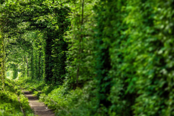 Tunnel of Love among ten of the world's lesser-known romantic places