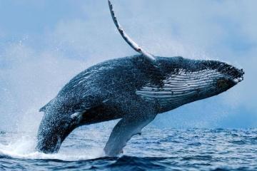 19 février: La journée internationale de la baleine