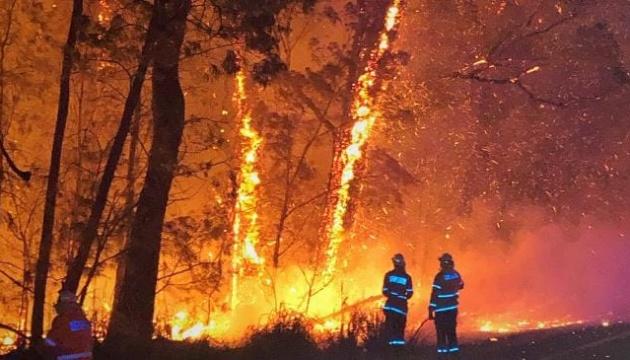 Злива в Австралії загасила ліс, який горів 74 дні