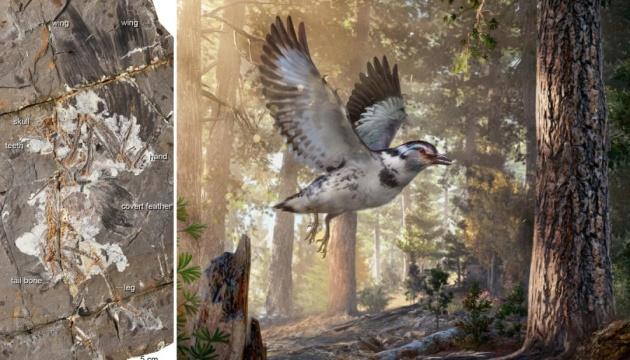 У М'янмі знайшли фрагмент птаха, що жив майже 100 мільйонів років тому