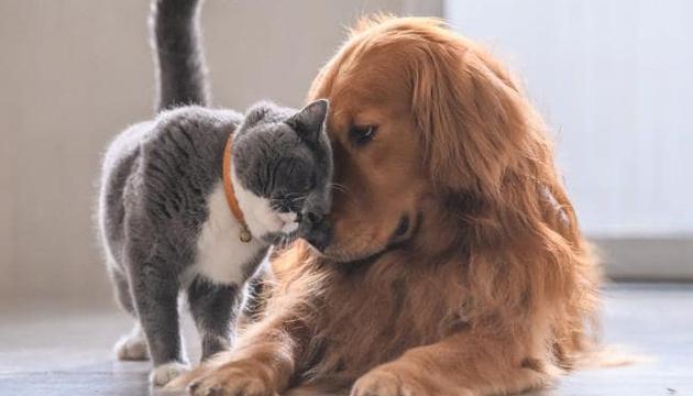 Європарламент ухвалив резолюцію проти нелегального продажу котів і собак