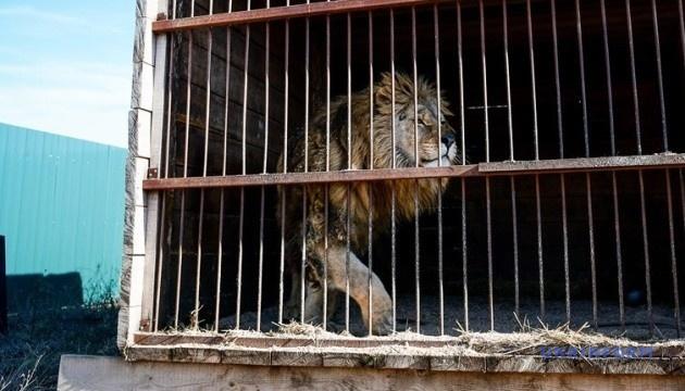 Яка доля чекає циркових тварин та їхніх дресирувальників в Україні?