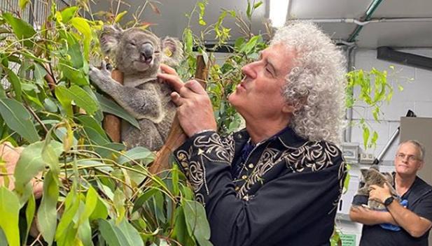 Гітарист Queen зіграв для коали, яку врятували від пожеж