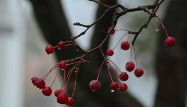 В Украину идет похолодание и ночные заморозки