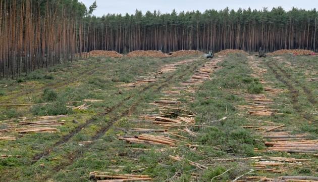 Німецький суд дозволив вирубку лісу під завод Tesla