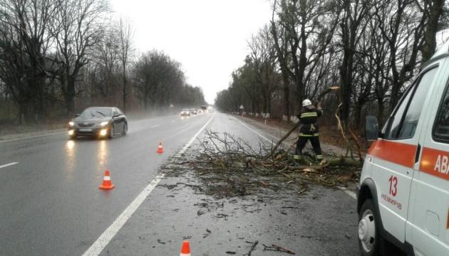 На Вінниччині повалені дерева заблокували дороги