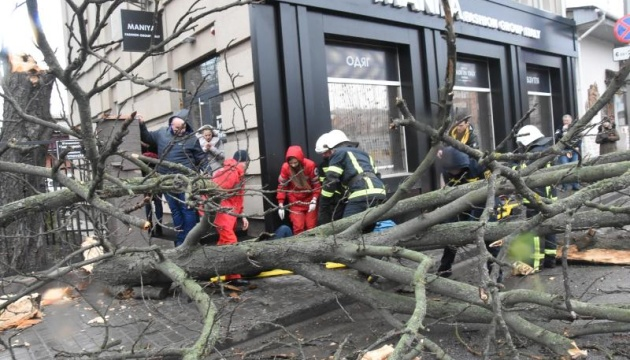 На Кировоградщине из-за сильного ветра упало дерево и травмировало женщину