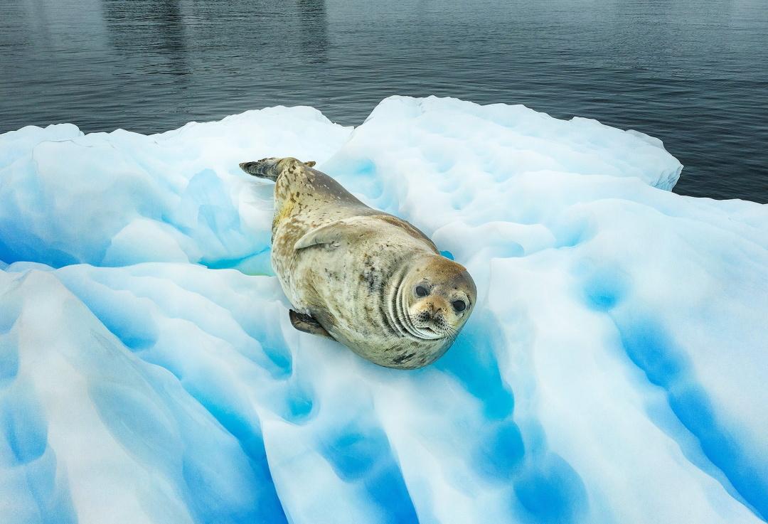 Тюлень на льоду