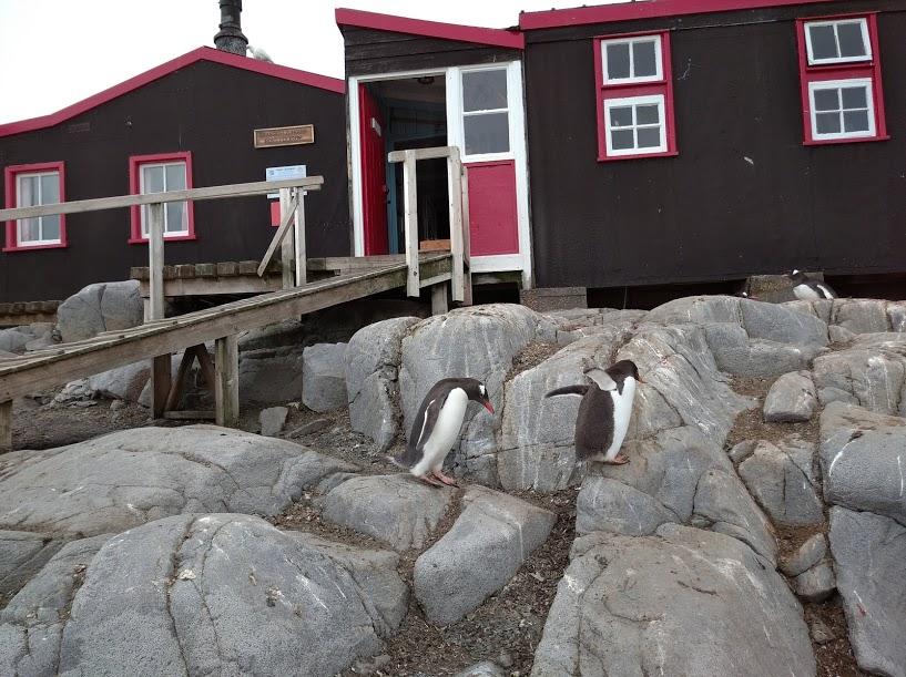 Пінгвіни біля музею