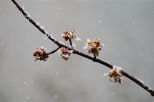 В Україну йде похолодання з мокрим снігом і заморозками
