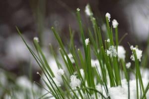 У Чехії зафіксували температурний рекорд - 20 градусів морозу