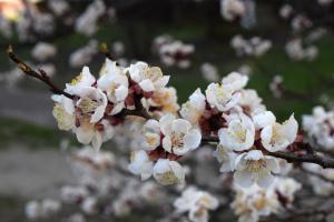 Wetter 2021: April in Kyjiw um 2 Grad kälter als Klimanorm