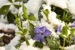 Весняні морози: найближчими ночами прогнозують до -8°