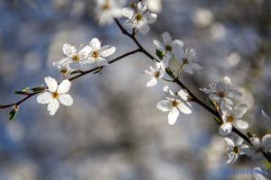 Весна перемагає: після снігу та морозу Україну прогріє до +17°