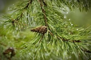 Синоптики прогнозируют дожди с грозами, в Карпатах снег и заморозки
