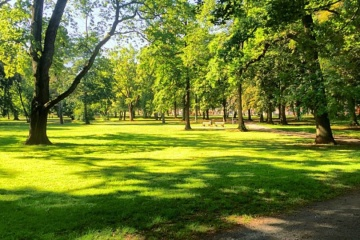 Over 100,000 trees to be planted in Kyiv this year