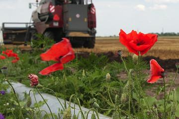 Ukraine abolishes moratorium on sale of agricultural land