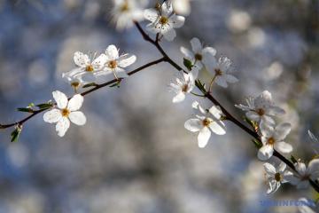 Весна побеждает: Украину прогреет до + 17°