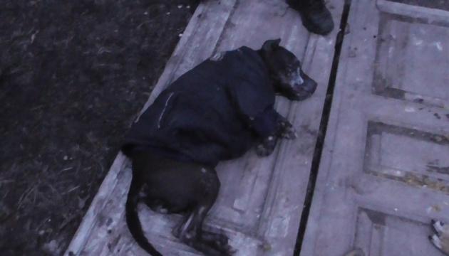 Ненакормленные и агрессивные: в Сумах женщина издевалась со своих собак