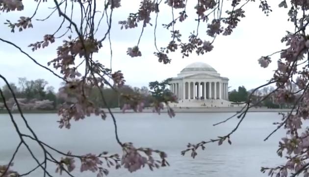 Без натовпу: як проходить фестиваль цвітіння японських вишень у Вашингтоні