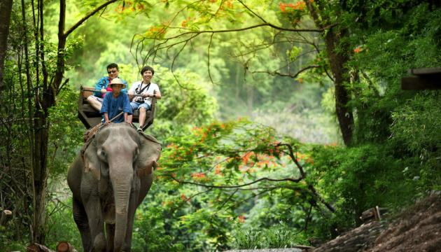 У Таїланді коронавірус «звільнив» десятки слонів, що катали туристів