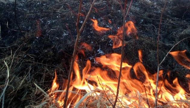 На Закарпатті вигоріло два гектари унікальної Долини нарцисів
